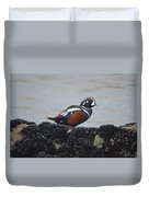 Harlequin Duck Duvet Cover