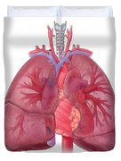 Heart Illustration, With Pulmonary Veins Duvet Cover
