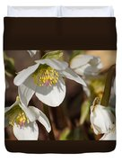 Helleborus Niger - Christrose Duvet Cover