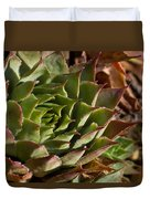 Hens And Chicks Sedum 1 Duvet Cover