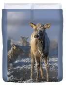 Hoarfrosted Elk Calf Duvet Cover