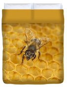Honey Bee Colony On Honeycomb Duvet Cover