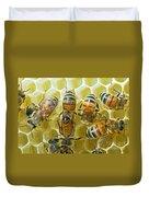 Honey Bees In Hive Duvet Cover