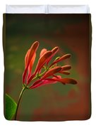 Honeysuckle Blooms Unopened 1 Duvet Cover