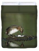 Horned Grebe Adult On Floating Nest Duvet Cover