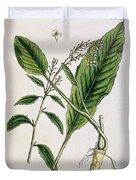 Horseradish Duvet Cover by Elizabeth Blackwell