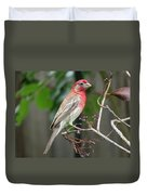 House Finch At Rest Duvet Cover