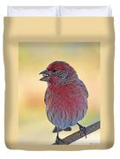 House Finch II Duvet Cover
