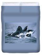Humpback Whales Gulp Feeding On Herring Duvet Cover