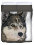 Husky Dog Breading Centre Duvet Cover by Lilach Weiss