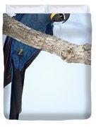 Hyacinth Macaw Anodorhynchus Duvet Cover