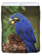 Hyacinth Macaw Eating Piassava Palm Nuts Duvet Cover