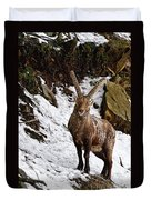 Ibex Pictures 22 Duvet Cover