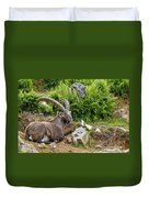 Ibex Pictures 64 Duvet Cover