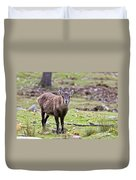Ibex Pictures 71 Duvet Cover