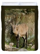 Ibex Pictures 115 Duvet Cover