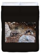 Ibex Pictures 134 Duvet Cover