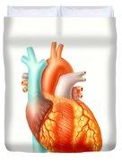 Illustration Of The Human Heart Duvet Cover