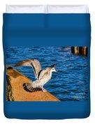 Immature Herring Gull At The Harbour Duvet Cover