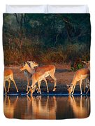 Impala Herd With Reflections In Water Duvet Cover
