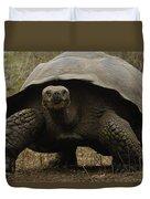 Indefatigable Island Tortoise Galapagos Duvet Cover