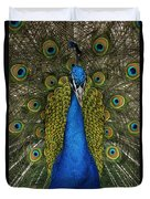 Indian Peafowl Male In Full Display Duvet Cover