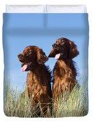 Irish Red Setter Dog Duvet Cover