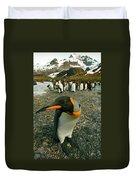 Juvenile King Penguin Duvet Cover