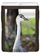 Juvenile Sandhill Crane Grus Canadensis Pratensis I Usa Duvet Cover