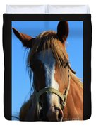Kansas Horse Potrait Red And White Duvet Cover by Robert D  Brozek