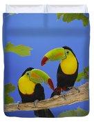 Keel-billed Toucan Pair Duvet Cover