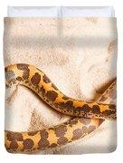 Kenyan Sand Boa Eryx Colubrinus Duvet Cover