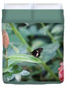 Key West Butterfly Conservatory - In Black White And Orange Duvet Cover