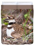 Killdeer And Young Duvet Cover