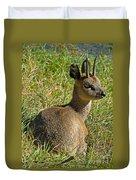 Klipspringer Antelope Duvet Cover