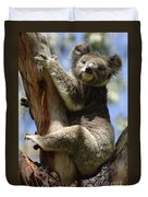 Koala Duvet Cover by Bob Christopher
