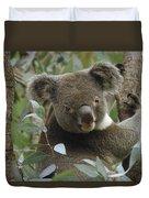 Koala Male In Eucalyptus Australia Duvet Cover