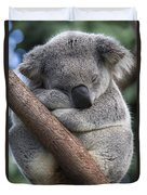 Koala Male Sleeping Australia Duvet Cover