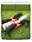 Labrador Puppies Eating Duvet Cover