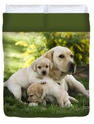 Labrador With Young Puppies Duvet Cover
