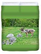 Large Reindeer Molting In Summer Pasture Art Prints Duvet Cover