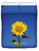 Laval, Quebec, Canada Sunflower Duvet Cover