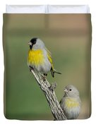 Lawrences Goldfinch Pair On Perch Duvet Cover