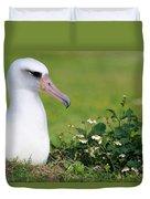 Laysan Albatross Nesting Hawaii Duvet Cover