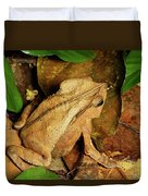 Leaf Litter Toad Bufo Typhonius Duvet Cover