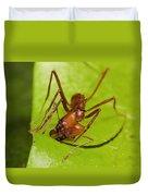 Leafcutter Ant Cutting Leaf Costa Rica Duvet Cover