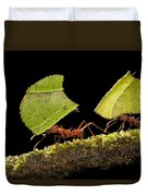 Leafcutter Ants Carrying Leaves Costa Duvet Cover