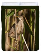 Least Bittern Pictures 14 Duvet Cover
