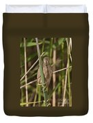Least Bittern Pictures 22 Duvet Cover