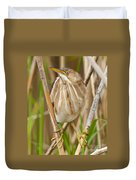 Least Bittern Pictures 35 Duvet Cover